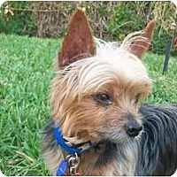 Adopt A Pet :: Rascal - Gulfport, FL