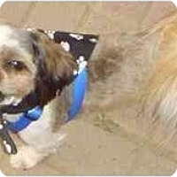 Adopt A Pet :: CHOO CHOO - Fowler, CA