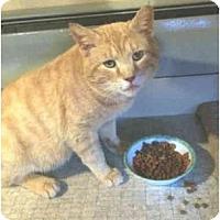 Adopt A Pet :: Adamson - Colmar, PA