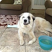 Adopt A Pet :: Logan - New Boston, NH