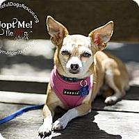 Adopt A Pet :: Chloe - San Francisco, CA