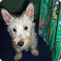 Adopt A Pet :: Graham - Lexington, TN