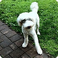 Adopt A Pet :: Biscuit - Gig Harbor, WA