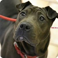 Adopt A Pet :: MICAELA - Higley, AZ