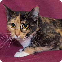 Adopt A Pet :: Patches - Elmwood Park, NJ