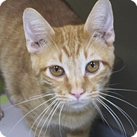 Adopt A Pet :: Icicle - Buffalo, WY