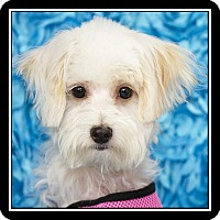 Adopt A Pet :: Pretty Girl - San Diego, CA