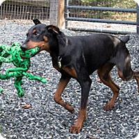 Adopt A Pet :: MERRILEE - Greensboro, NC