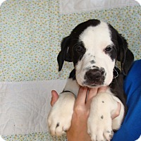 Adopt A Pet :: Lucus - Oviedo, FL