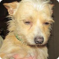 Adopt A Pet :: Leo - Rocky Mount, NC
