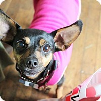 Adopt A Pet :: Dezi - Eugene, OR