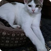 Adopt A Pet :: Precious - Witter, AR