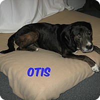 Adopt A Pet :: OTIS - Port Clinton, OH