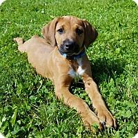 Adopt A Pet :: Jagger - PENDING - Grafton, WI