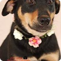 Adopt A Pet :: Babe - Westport, CT