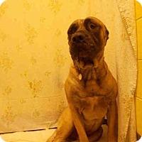 Adopt A Pet :: LOGAN - Upper Marlboro, MD