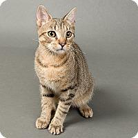 Adopt A Pet :: Ennis - Wilmington, DE