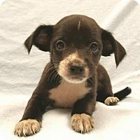 Adopt A Pet :: Bart - Modesto, CA