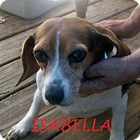 Adopt A Pet :: ISABELLA - Ventnor City, NJ