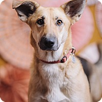 Adopt A Pet :: Loni - Portland, OR