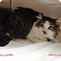 Adopt A Pet :: NOAH - Marietta, GA