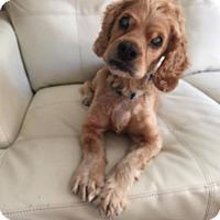 Adopt A Pet :: Kevin - South San Francisco, CA
