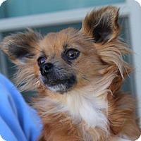 Adopt A Pet :: MANDY - Red Bluff, CA