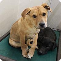 Adopt A Pet :: A13 K-9 - Odessa, TX