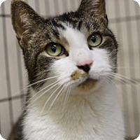 Adopt A Pet :: Lucky - Lancaster, PA