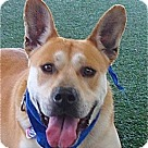 Adopt A Pet :: ADOPTION PENDING- Monty VIDEOS