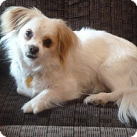 Adopt A Pet :: Katelyn Kate - Shawnee Mission, KS