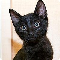 Adopt A Pet :: Castiel - Irvine, CA