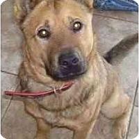 Adopt A Pet :: Jersey - Gilbert, AZ
