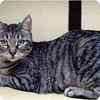 Adopt A Pet :: Rodney - Irvine, CA