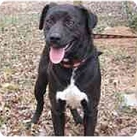 Adopt A Pet :: Lulu - Foster Needed! - kennebunkport, ME