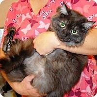 Adopt A Pet :: Sophie Grace - Monroe, NC