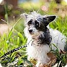 Adopt A Pet :: Hope