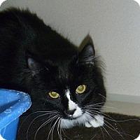Adopt A Pet :: Ramona - Hamburg, NY