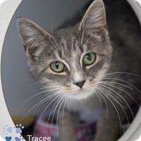 Adopt A Pet :: Tracee - Merrifield, VA