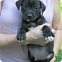 Adopt A Pet :: Cesare - Brookside, NJ