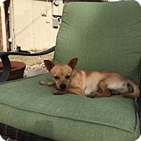 Adopt A Pet :: Parker - Mesa, AZ