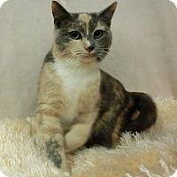 Adopt A Pet :: AMIRA - New Cumberland, WV