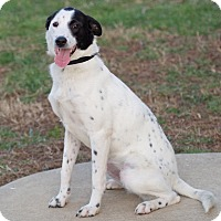 Adopt A Pet :: Adele Pup - Knoxville, TN