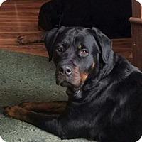 Adopt A Pet :: Chloe - Rexford, NY