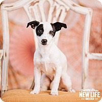 Adopt A Pet :: Azalea - Portland, OR