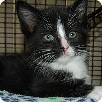 Adopt A Pet :: KLONIKE - Acme, PA