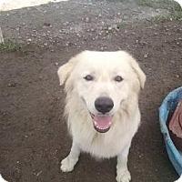 Adopt A Pet :: Max - Pembroke, GA