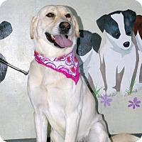 Adopt A Pet :: Jackie - Erwin, TN
