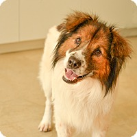 Adopt A Pet :: Loui - San Antonio, TX