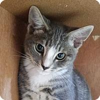 Adopt A Pet :: Ollie - Chula Vista, CA